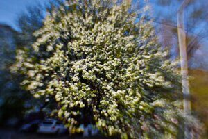 #35  LENSBABY SWEET 35 OPTIC 35mm F/2.5